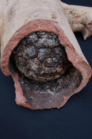 Cork Stopper in Dressel 2/4 Amphora, Villa B, Oplontis (Italy).
